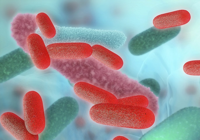 Abbildung von Salmonellen-Erregern