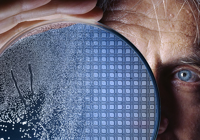 Mann guckt durch Petrischale